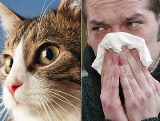 Алергія на котячу шерсть. Симптоми і лікування