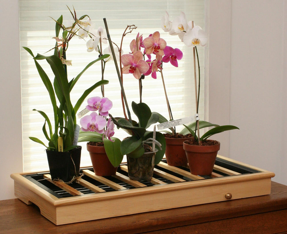 Догляд за орхідеями