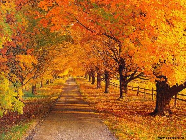 Як осінь змінює наш організм